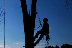 tree service, hard work, lumberjack